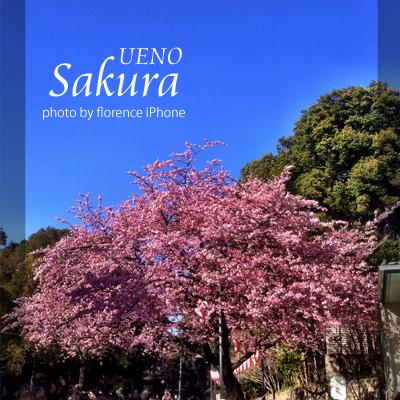 上野桜140302