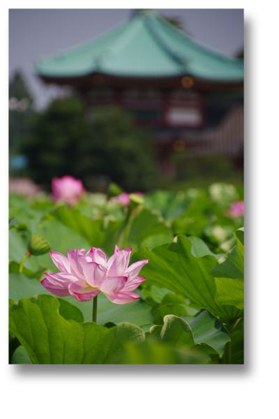 上野蓮140707