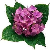 flower4211.jpg