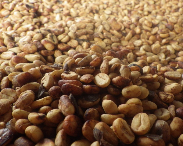 Air+Esky+Coffee+in+Panama 201400819