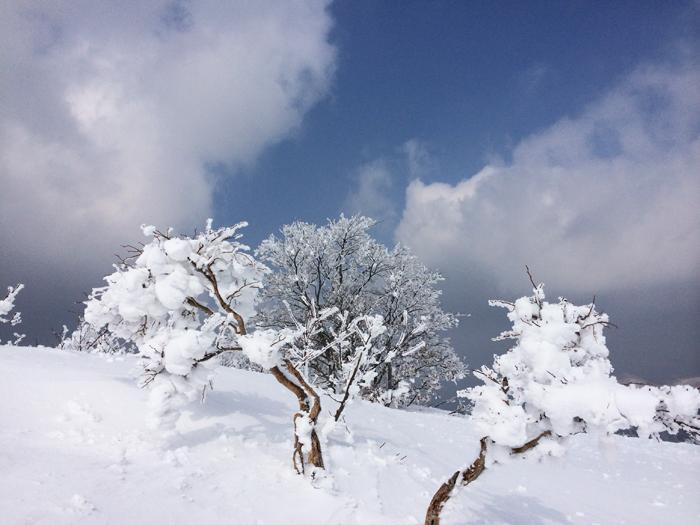 Mt kenashi 216016