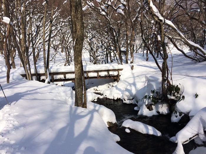 Mt kenashi 216027