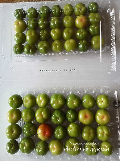green acerola1