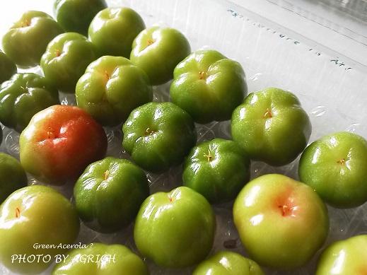 green acerola2
