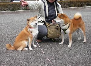 凜ちゃんと桜太 1