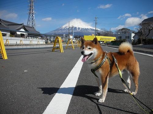 まだまだ冬富士