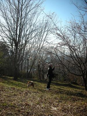 桜撮る父と退屈な柴