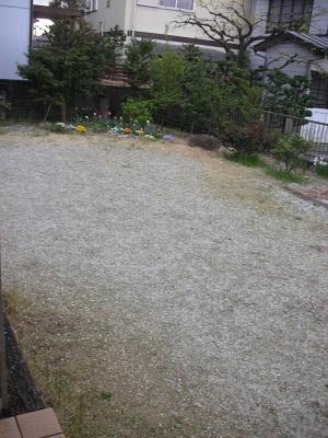 庭が真っ白