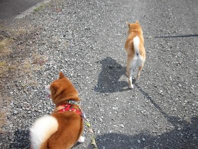 ユッキ-と散歩 1