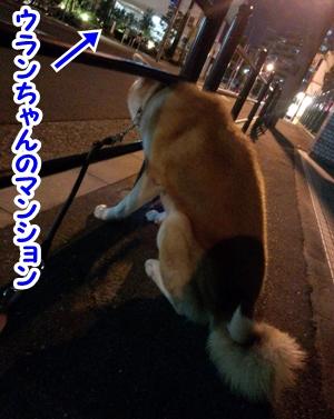 b_20140525_4.jpg
