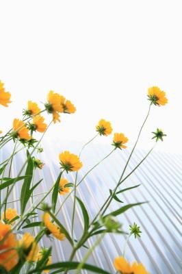 20140622 庭の花1