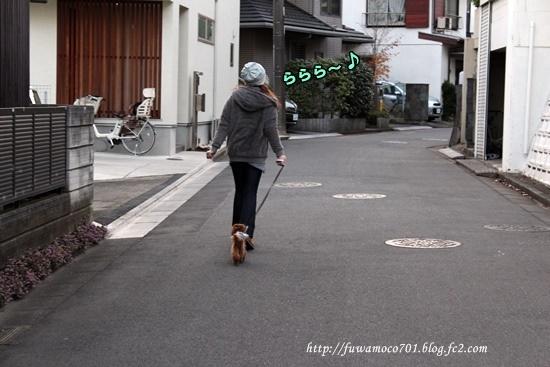 11月25日お散歩デビュー