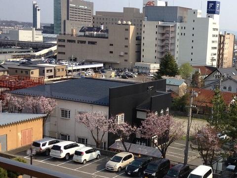 25日桜2