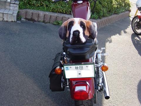 6ハーレー犬