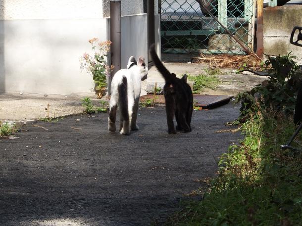 猫11,14