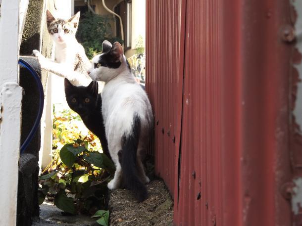 猫11,13,14