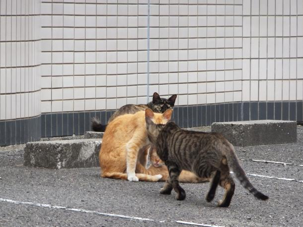 猫19,20,21,22