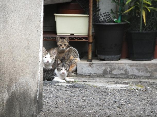 猫2,3,4,5
