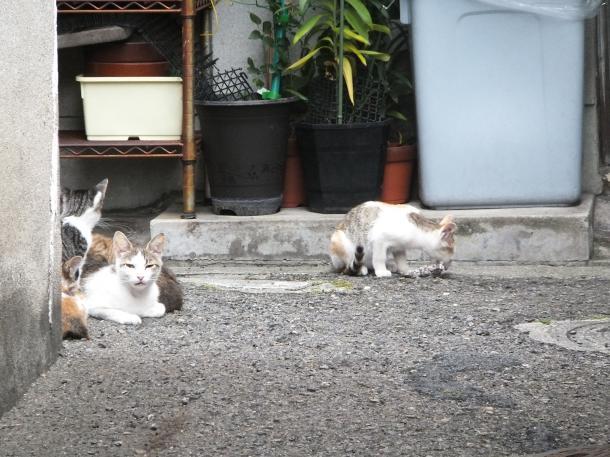 猫2,3,4,5,6