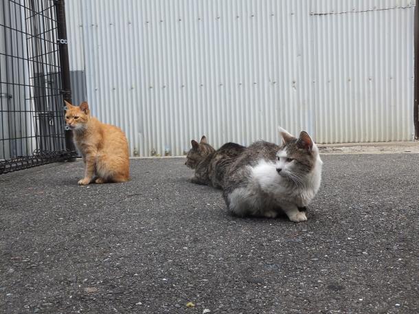 猫32,33,34