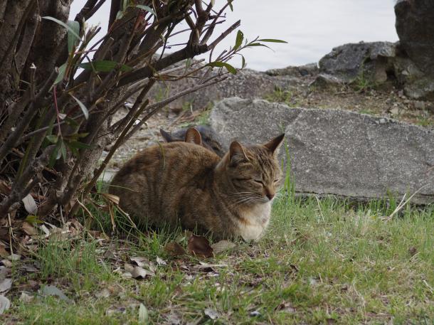 猫18,19