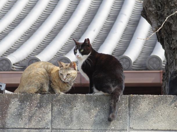 猫15,17