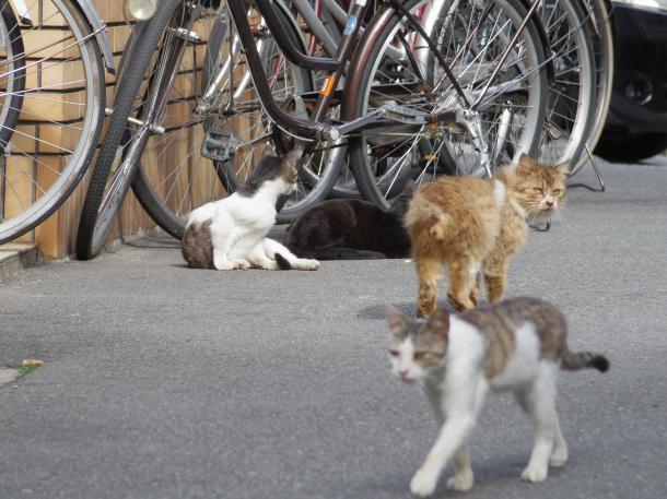 猫15,16,17,18