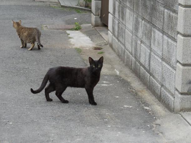 猫15,16