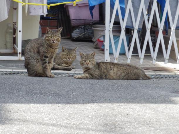 猫3,4,5