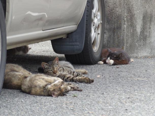 猫1,2,3,4