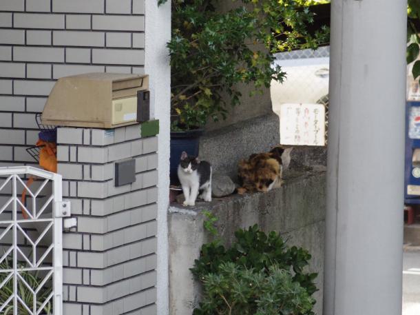 猫14,17