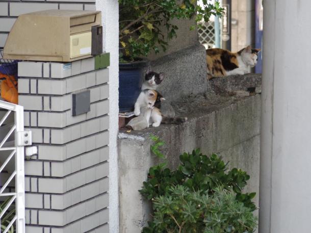 猫14,15,17