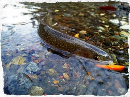 2014 初岩魚