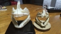 ロクマルの歯と53,5の歯