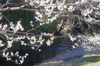 越生川沿い14-3-22
