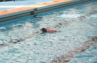 プール逃げる14-7-27