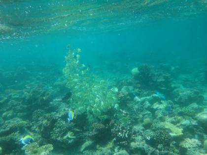 黄色い魚の群れ(1)