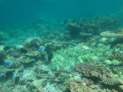 黄色い魚の群れ(2)
