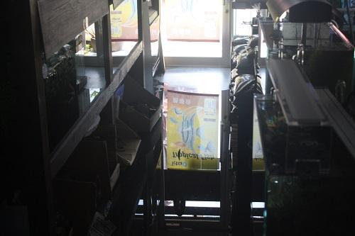 夢のお店自体が水槽失敗www 東海 岐阜 熱帯魚 水草 観葉植物販売 Grow aquarium