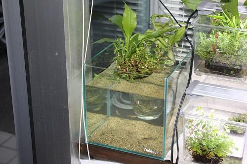 小さな水辺セット 東海 岐阜 熱帯魚 水草 観葉植物販売 Grow aquarium
