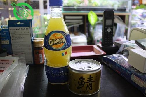 何故かサバ缶・・・ 炭酸オレンジでいただくw 東海 岐阜 熱帯魚 水草 観葉植物販売 Grow aquarium