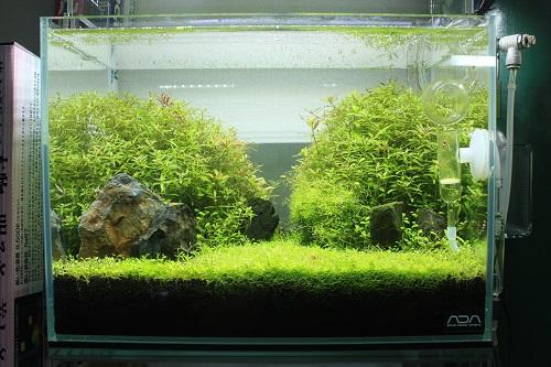 水草レイアウト水槽 東海 岐阜 熱帯魚 水草 観葉植物販売 Grow aquarium