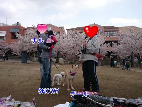 DSC_1261.jpg