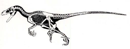 raptor_born.jpg