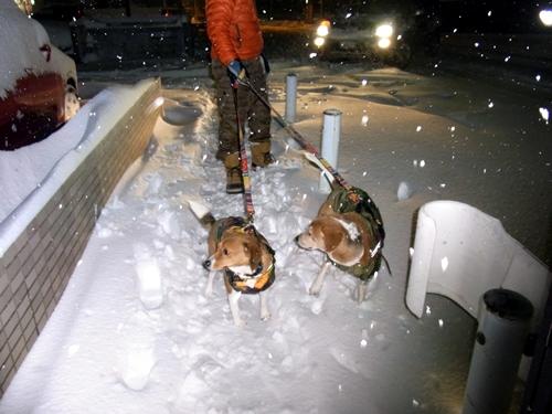12凄い雪