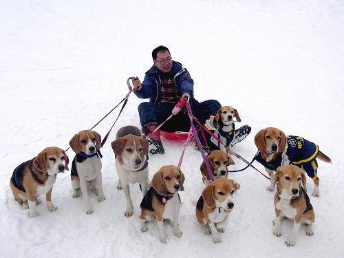 28犬ぞり
