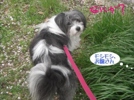 4月散歩_convert_20140409204925