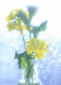 ★200菜の花と花瓶