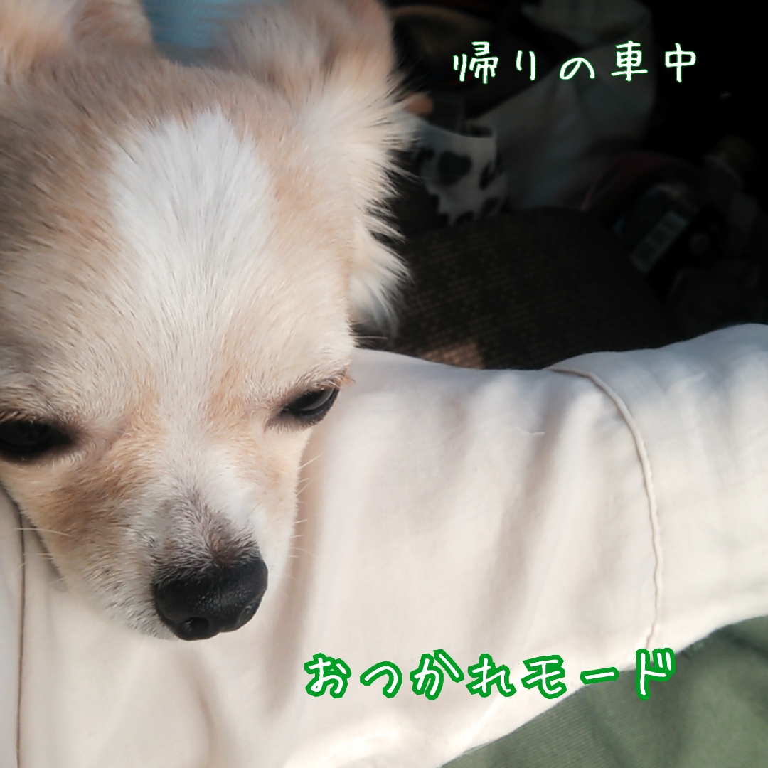 LINEcamera_share_2014-09-08-22-39-13.jpg