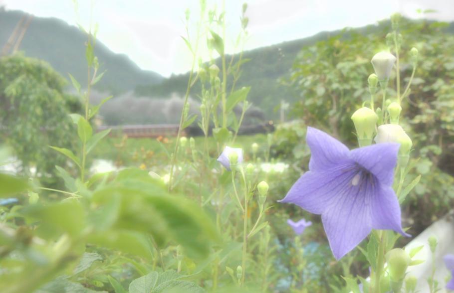 140713kikyou020_ch.jpg